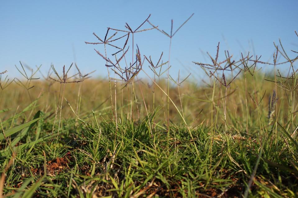 Imagen que contiene pasto, exterior, planta, parado  Descripción generada automáticamente